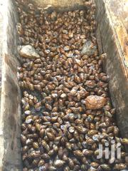 Red & Black Snails | Livestock & Poultry for sale in Greater Accra, Asylum Down