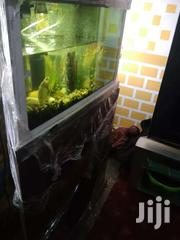 Fish Aquarium For Decorations | Fish for sale in Greater Accra, East Legon