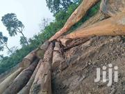 SHANTUI Timber Dozer SD22F | Heavy Equipments for sale in Greater Accra, East Legon