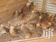 Pheasants Cock | Other Animals for sale in Ashanti, Kumasi Metropolitan