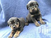 Rottweiler Pups | Dogs & Puppies for sale in Greater Accra, Odorkor
