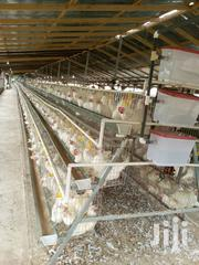 Chicken Cage | Livestock & Poultry for sale in Greater Accra, Odorkor