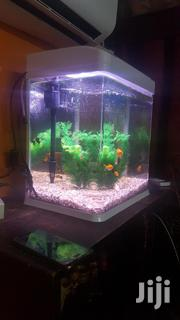 Aquarium With Live Fishes   Fish for sale in Greater Accra, North Kaneshie