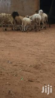 Biggest Sheep And Goats | Other Animals for sale in Northern Region, Zabzugu/Tatale