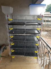 Quail Cages | Livestock & Poultry for sale in Greater Accra, Roman Ridge