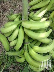 Fresh Plaintains | Feeds, Supplements & Seeds for sale in Greater Accra, Odorkor