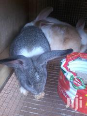 Yohanny Rabbit Farm | Other Animals for sale in Greater Accra, Adenta Municipal