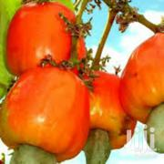 Cola And Cashew Nut Mini-export Training | Landscaping & Gardening Services for sale in Western Region, Ahanta West