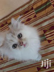 Cats And Kittens Available For New Homes | Cats & Kittens for sale in Greater Accra, Accra Metropolitan