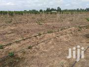Agricultural Farm Irrigation Services | Other Services for sale in Volta Region, Ho Municipal