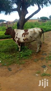 Cow For Sale | Livestock & Poultry for sale in Northern Region, Gushegu