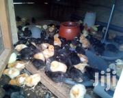 Poultry Birds | Other Animals for sale in Central Region, Gomoa East