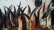Antelope, Ram And Cow Horns Available | Arts & Crafts for sale in Greater Accra, Accra Metropolitan