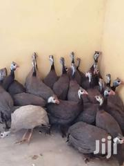 Guinea Fowls | Livestock & Poultry for sale in Greater Accra, Korle Gonno