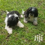 Shih Tzu Puppys | Dogs & Puppies for sale in Greater Accra, Accra Metropolitan