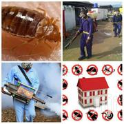 Snakes Fumigation Management | Cleaning Services for sale in Greater Accra, East Legon