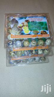 Quail Eggs   Livestock & Poultry for sale in Western Region, Aowin/Suaman Bia