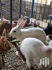 Rabbits Breeding Stocks | Livestock & Poultry for sale in Greater Accra, Ga East Municipal