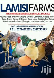 Quality Day Old Chicks Of All Kinds | Livestock & Poultry for sale in Greater Accra, Ashaiman Municipal