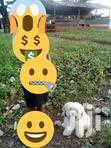 Young Male Purebred Poodle | Dogs & Puppies for sale in Accra Metropolitan, Greater Accra, Ghana