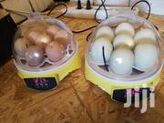 Incubator (7 Eggs) | Pet's Accessories for sale in Greater Accra, Alajo