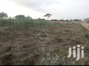 17 Acre Coconut Farm | Landscaping & Gardening Services for sale in Eastern Region, Akuapim North