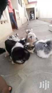 Poppy's | Dogs & Puppies for sale in Greater Accra, Odorkor