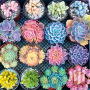 Succulent Flower Seeds 100pcs | Feeds, Supplements & Seeds for sale in Greater Accra, Kwashieman