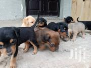 Baby Female Mixed Breed Rottweiler | Dogs & Puppies for sale in Greater Accra, Ga West Municipal