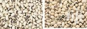 White Beans | Feeds, Supplements & Seeds for sale in Ashanti, Kumasi Metropolitan
