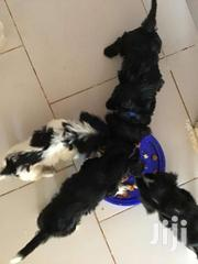 Puddle For Dog Lovers | Dogs & Puppies for sale in Greater Accra, South Labadi