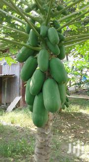 Dwarf Pawpaw Very Sweet | Feeds, Supplements & Seeds for sale in Greater Accra, Accra Metropolitan