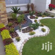 Daco Palm. International Professiomal Landscaping & Gardening Designin | Landscaping & Gardening Services for sale in Greater Accra, Achimota