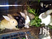 Selling My Rabbits | Other Animals for sale in Ashanti, Obuasi Municipal