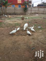 Matured Ducks Available For Sale | Birds for sale in Greater Accra, Akweteyman