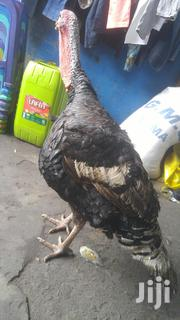 Big/Matured Turkeys For Sale | Livestock & Poultry for sale in Greater Accra, Ga South Municipal
