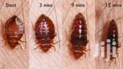 Bed Bugs Treatment | Cleaning Services for sale in Greater Accra, Accra Metropolitan
