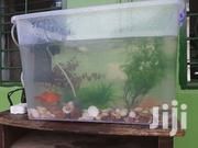 Aquarium Centre Tables and Office Desks for Sale | Fish for sale in Greater Accra, Dansoman