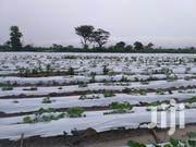 Vegetable Farming Experts | Farm Machinery & Equipment for sale in Greater Accra, Cantonments