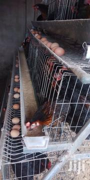 Poultry Cages | Farm Machinery & Equipment for sale in Greater Accra, Ga West Municipal