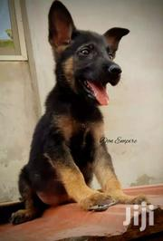 German Sheperd Puppy | Dogs & Puppies for sale in Greater Accra, Kwashieman