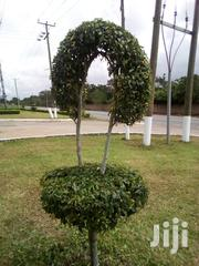 Cleaning And Gardening Services | Landscaping & Gardening Services for sale in Greater Accra, Accra Metropolitan