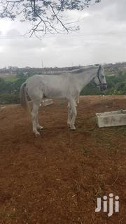 Horses For Sale | Other Animals for sale in Greater Accra, Dansoman