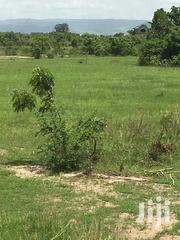 Lands At Dawa Ningo For Sale | Land & Plots For Sale for sale in Greater Accra, Ashaiman Municipal