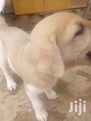 Baby Female Mixed Breed Mastiff | Dogs & Puppies for sale in Greater Accra, Accra Metropolitan