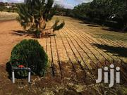 Great Irrigation Engineering | Landscaping & Gardening Services for sale in Brong Ahafo, Berekum Municipal
