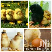 Day Old Chick's And Chicken All Kinds | Livestock & Poultry for sale in Greater Accra, Accra Metropolitan