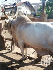 Cow For Sale   Other Animals for sale in Greater Accra, Nima