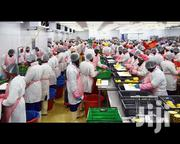 Factory Workers Needed | Manufacturing Jobs for sale in Greater Accra, Avenor Area