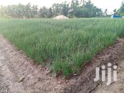 80x80 Feet Plot of Land | Land & Plots For Sale for sale in Volta Region, Keta Municipal